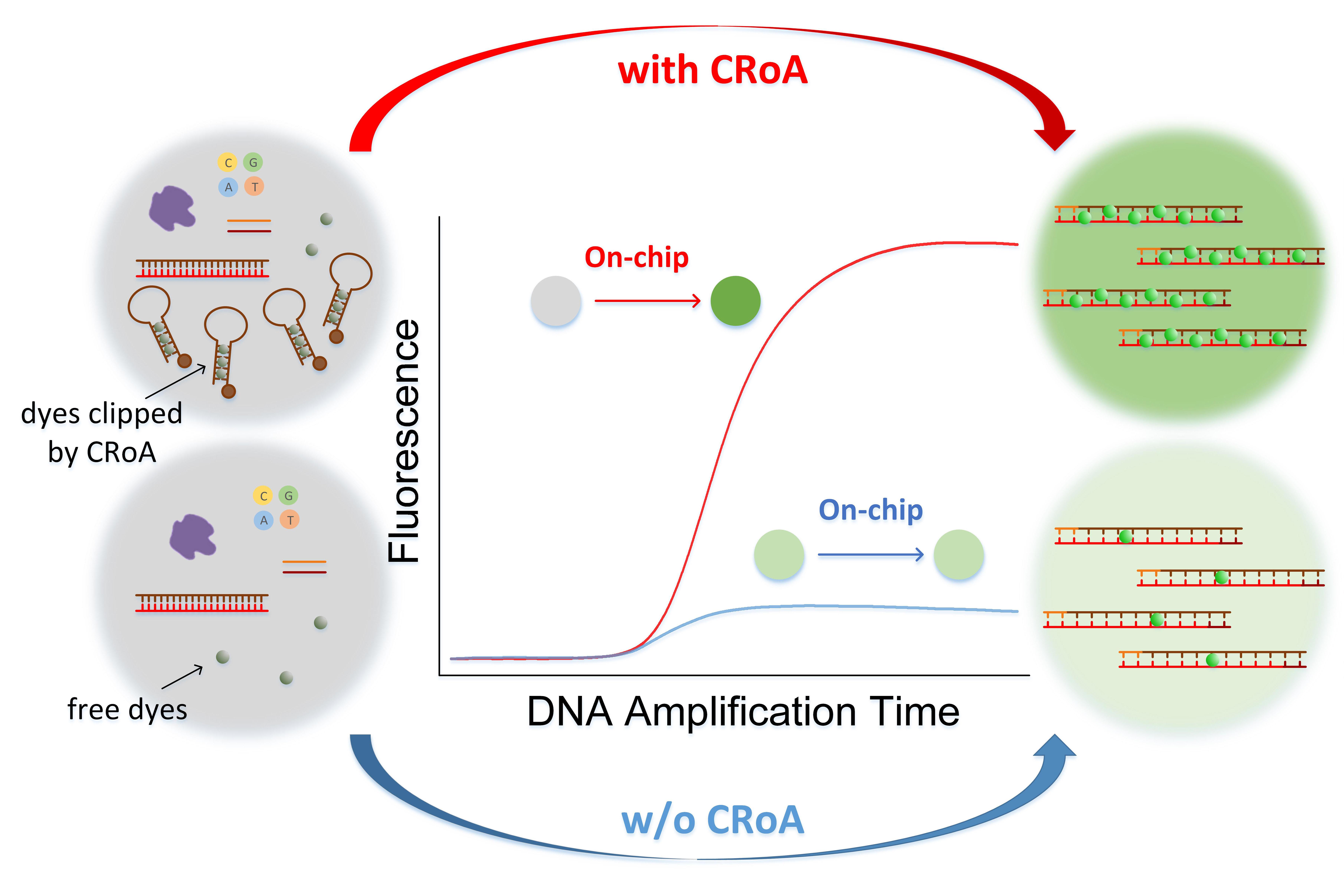 UM achieves new breakthrough in nucleic acid analysis technique